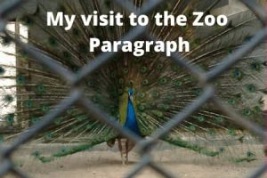 My visit to the Zoo Paragraph